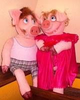 год козы со знаком свинья