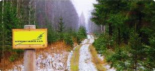 Где срубить ёлку в Латвии. Где находятся Государственные Леса Латвии?